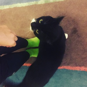 Merino wool socks cycling and a cat