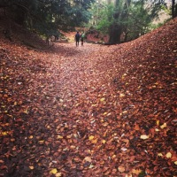 The North Downs Way - Stage 2 Guildford to Box Hill
